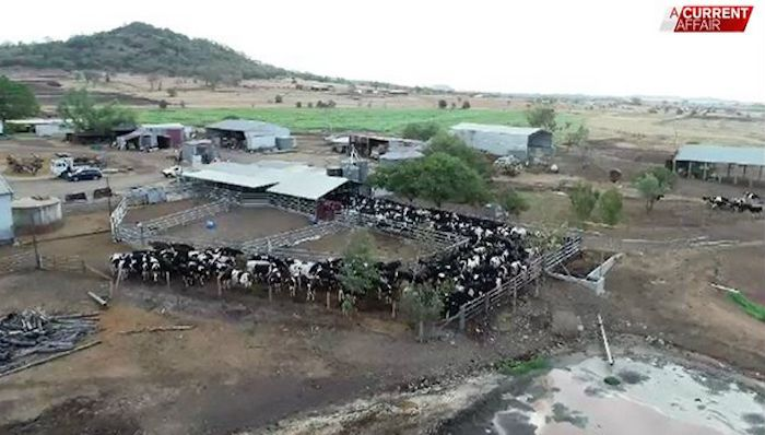 The drought is hitting hard on the Portegys family's dairy property. (A Current Affair)